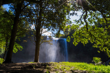 Whangarei waterfall