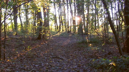 Forest sunset timelapse. Autumn time.