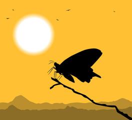 silhouette di farfalla
