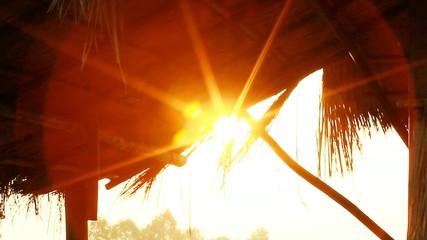 Tilt down camera, Little farm hut in rice field with sun light