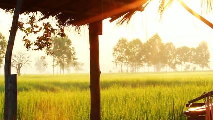 Little farm hut in rice field with sun light, Pan camera