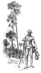 Victorian engraving of a    palm tree climber, Sri Lanka