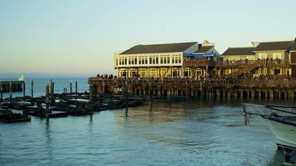 California Sea lions Pier 39 San Francisco Bay, Pacific Ocean, USA