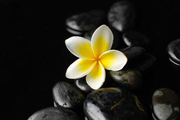 Zen stones and frangipani