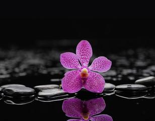 Zen stones and macro of orchid