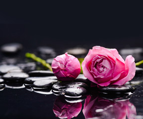 Two rose and wet stones