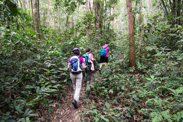 Group of people hiking in a tropical forest