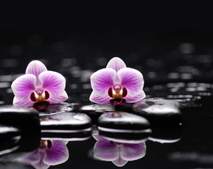 Pink two orchid with therapy stones