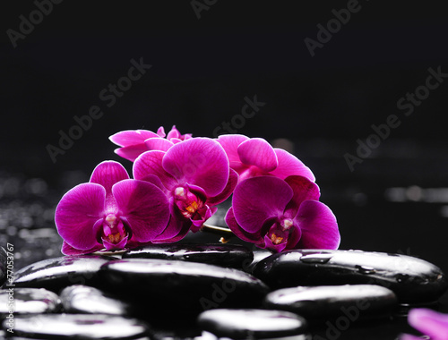 Fototapeta Branch orchid with therapy stones