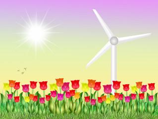 eolic in tulips field