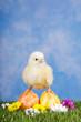 Ostern – kleines Küken mit Eiern