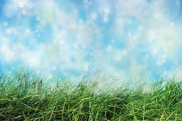Gras – Himmel – Hintergrund