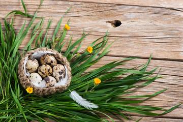 quail eggs easter decoration