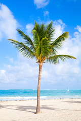 Coconut palm tree growing on a sandy beach