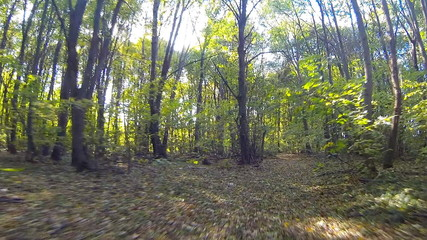 HD steadicam. Camera fly in forest. Wide angle.