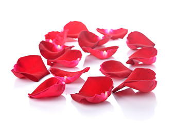 Beautiful rose petals on a white background