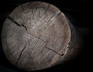 Tree stump with annual rings on dark background.