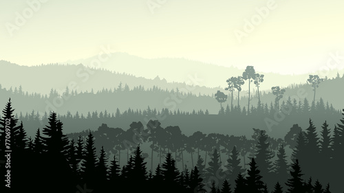 Wild coniferous wood in green tone. - 77069702