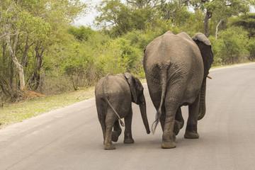 Zwei Elefanten gehen ihren Weg