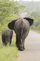 Zwei Elefanten sínd unterwegs
