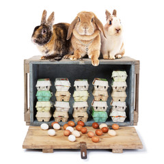 3 Easter bunnies on a case with eggs