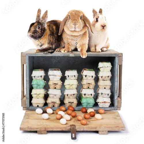 Leinwandbild Motiv 3 Easter bunnies on a case with eggs