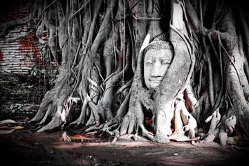 Unseen of thailand Buddha head