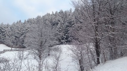 Winter forest and rural landscape