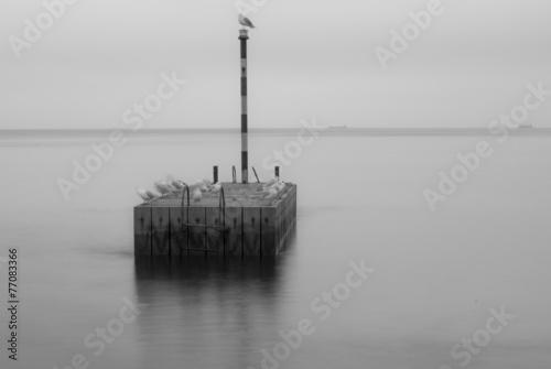 Morze Bałtyckie, mewy, Polska, Gdańsk
