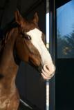 Amico cavallo 3
