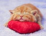 Kitten sleeping on the heart-shaped pillow