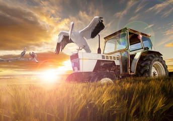 Campos de trigo, aves exóticas y tractor. Viaje Rural