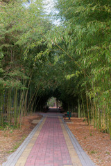 path in the shade of bamboo