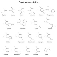 Skeletal structures of basic amino acids