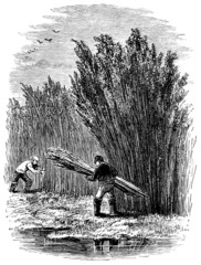 19th century engraving of a Fenland scene, UK