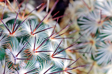 Cactus spikes detail