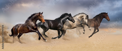 Fototapeta  Four beautiful horse run gallop on desert dust