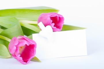 Tulpen mit Schild