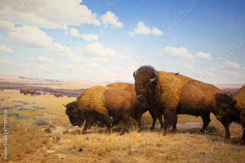 Poster Natuur Park herd of bison
