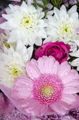 Flowers - Gerbera And Chrysanthemums