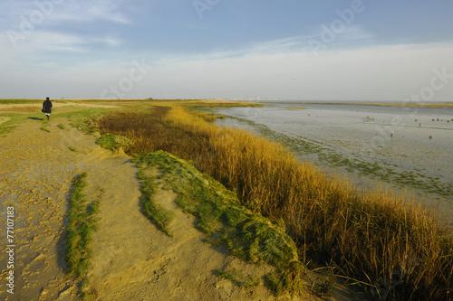 Baie de Somme, promenade nature sur Le Hourdel