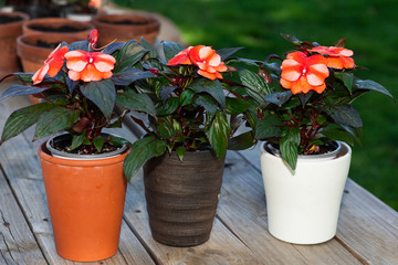 Garden flowers in pots