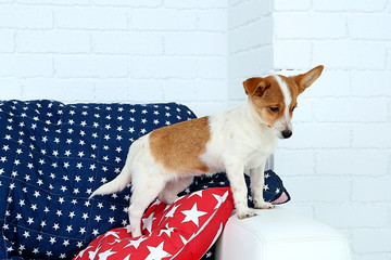 Cute dog on sofa, on white wall background
