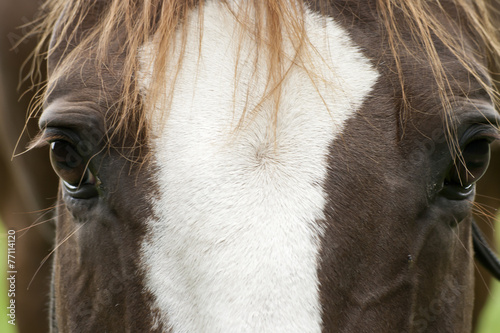 canvas print picture Pferde Gesicht Nah