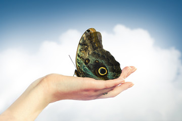 butterfly on hand, sunny clouds background