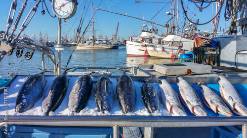 Fish Market at Steveston Village - 77123182