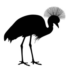 African crowned crane. Vector silhouette