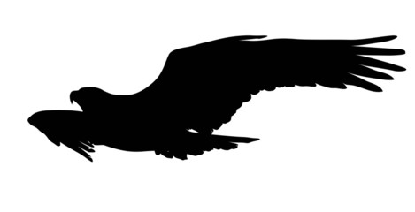 Vector eagle flying