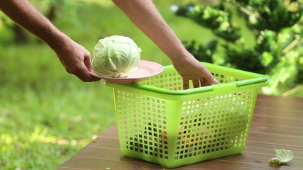 man pours cabbage to basket and take vegetables for cooking trad