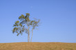 Lonely of tree of sky